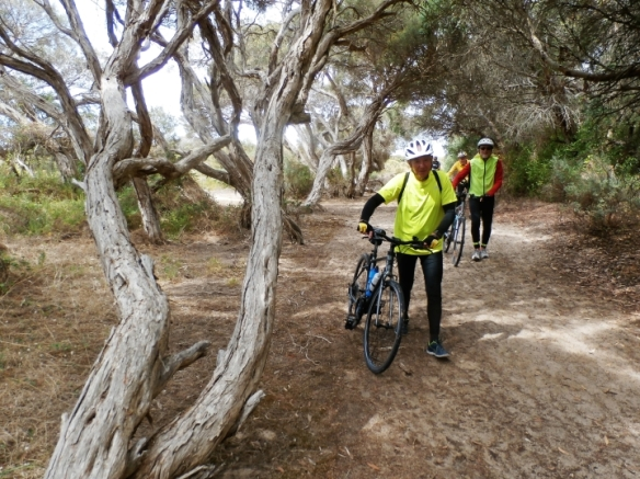 Back in town, we walked beside paperbark trees next to Lake Fox as the sand was loose. Photo taken by Paul.